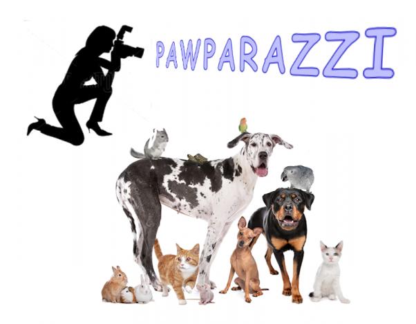 Pawparazzi_3